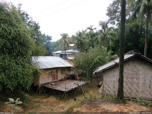 চান্দা হেডম্যান পাড়া, রুমা, বান্দরবান - নিশাচর